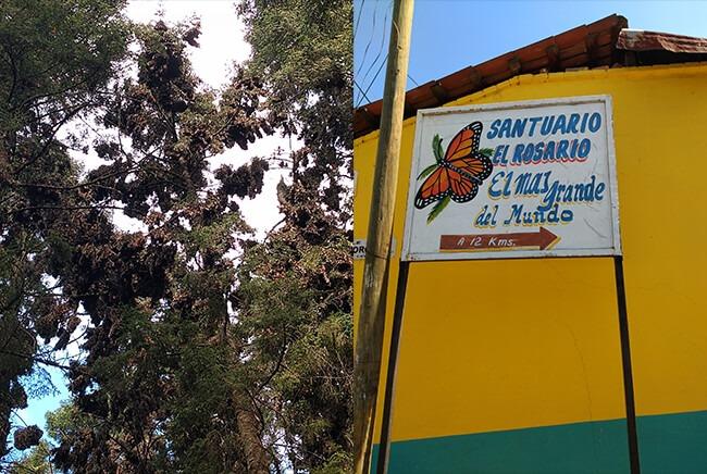 Recorridos Turisticos a la Mariposa Monarca, salidas desde Morelia