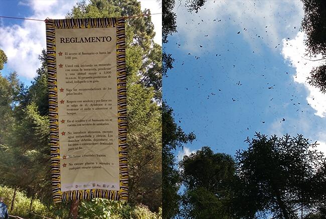 Tours Santuarios de Mariposa Monarca en Michoacán