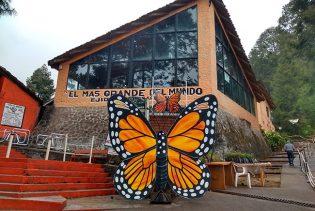Tour a la Mariposa Monarca desde Morelia